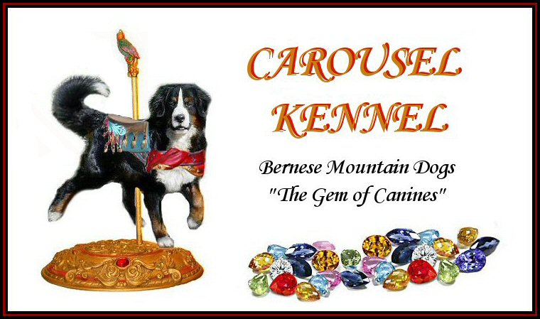 Bernese Mountain Dogs Of Carousel Kennel