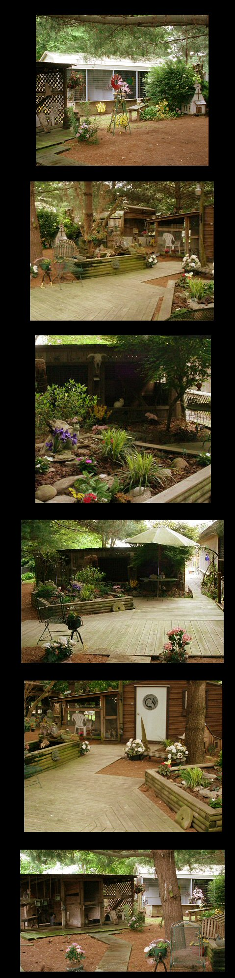 image of collage of backyard cattery pictures