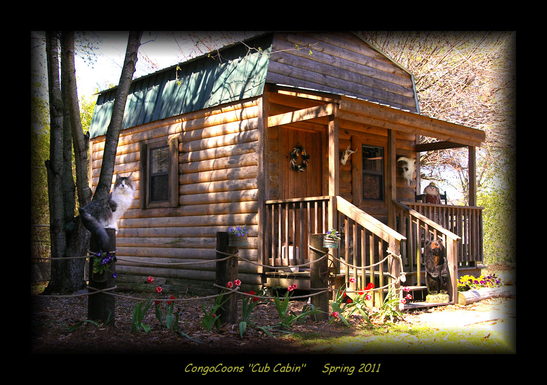 photograph of the cabin where you pick your maine coon kitten up