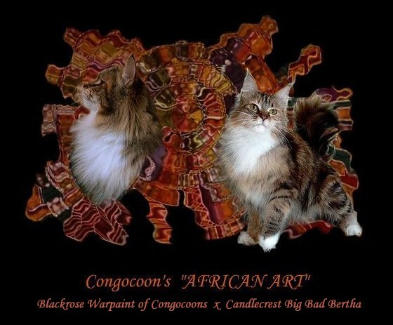 image of a maine coon named marmosette