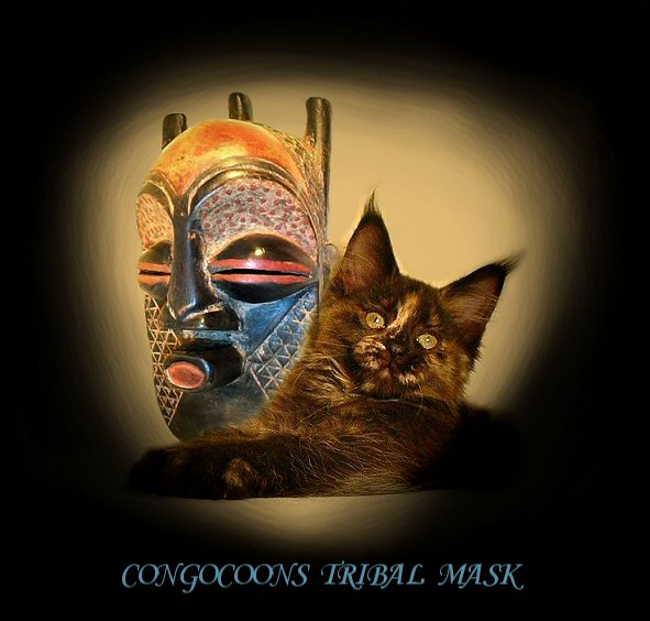 a maine coon cat named tribal mask